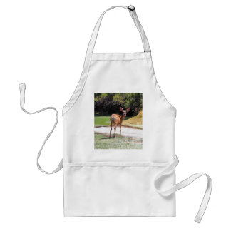 deer looking at the camera nature adult apron