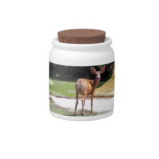 deer looking at the camera nature candy jar