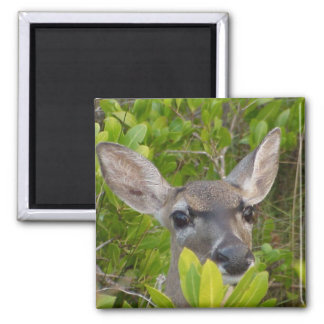 Deer Lovers Gift Ideas 2 Inch Square Magnet
