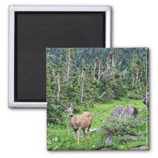 Deer 2 Inch Square Magnet