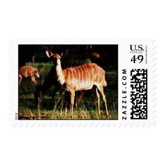 Deer Me Nyala Postage