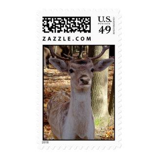 Deer Me Postage Stamp