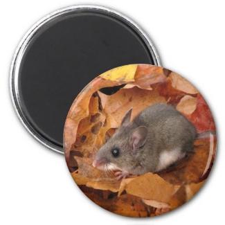 Deer mouse Magnet