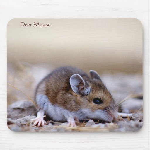 Deer Mouse on a Mousepad
