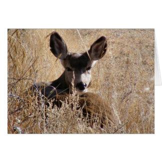 Deer Note Card