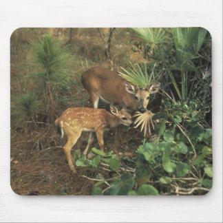Deer / Odocolileus virginian calvium Mouse Mats