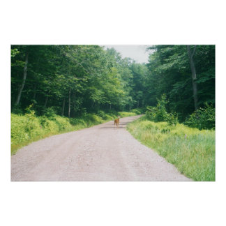 Deer on a Catskill Mountain Road Poster