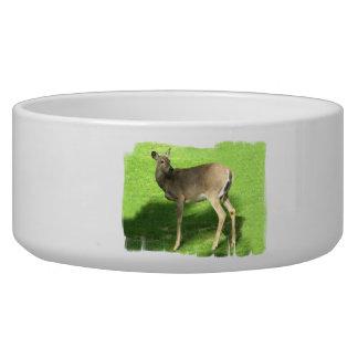 Deer on Grass Pet Bowl (2) sizes