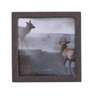 Deer on Rock Formation Keepsake Box