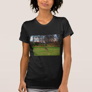 Deer on sunset golf course T-Shirt