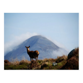 Deer on the mountain Les Rousses Postcard