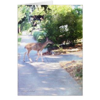 Deer on Walk Greeting Card