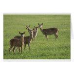 Deer Paradise Cards