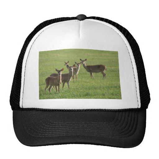 Deer Paradise Mesh Hat
