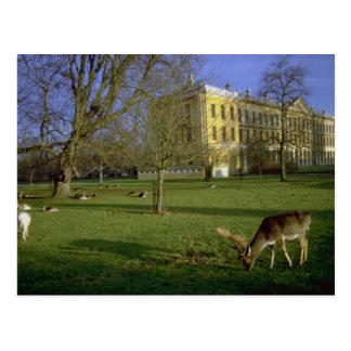 Deer park, Magdalen College, Oxford, U.K. Postcard