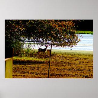Deer Photo Poster