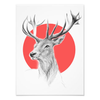 Deer portrait pencil drawing red Photo print