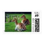 deer postage stamps