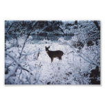 deer posters