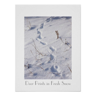Deer Prints Snow Poster