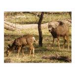 Deer Raspberries II Post Card