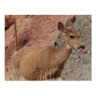 Deer Raspberries Postcard