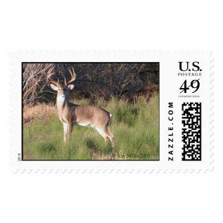 Deer-River-2-03 Sellos Postales