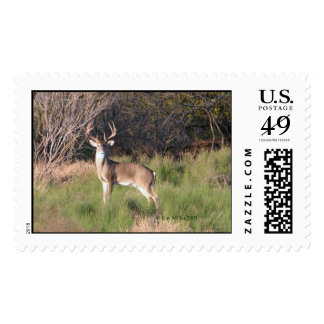 Deer-River-2-03 Timbres Postales