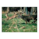 Deer running in forest greeting cards