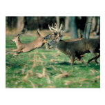 Deer running in forest post cards