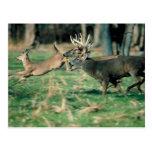 Deer running in forest postcard