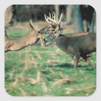 Deer running in forest square stickers