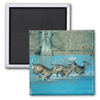 Deer running in water magnet