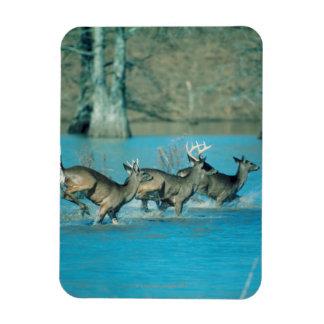 Deer running in water vinyl magnets