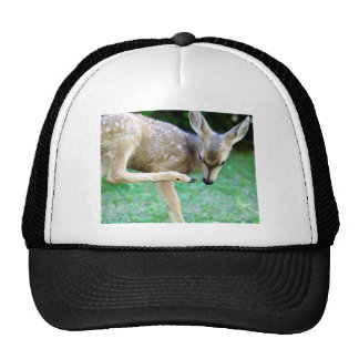 Deer - Scratch that Itch Mesh Hats