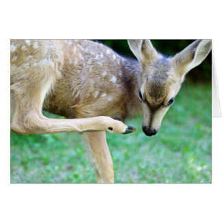 Deer - Scratch that Itch Greeting Card