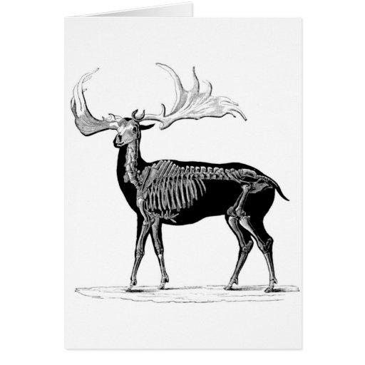 Deer skeleton greeting card