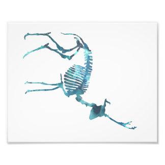 Deer skeleton photo print