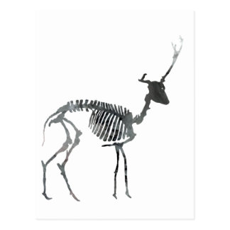 Deer skeleton postcard