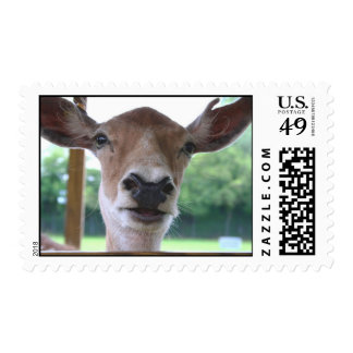 deer smile postage stamps