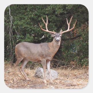 Deer Square Sticker