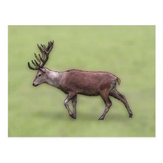 Deer Stag, Digital Art. Postcard