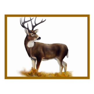 Deer standing alone on customizable products postcard