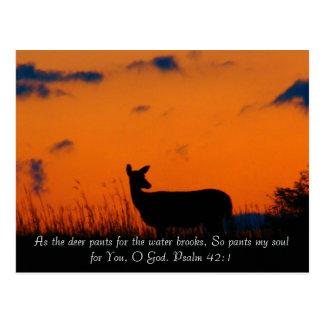 Deer Sunset Postcard