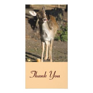 Deer Thank You Photocard Card