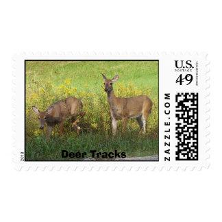Deer Tracks. Postage Stamp