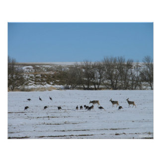 Deer & Turkey-Grazing Together Poster