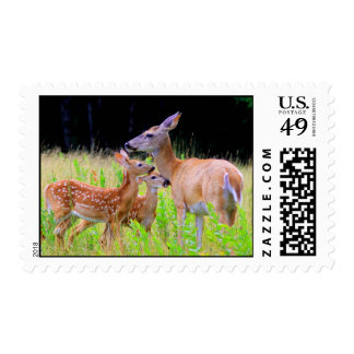 Deer Twin Fawns and Mother Stamps