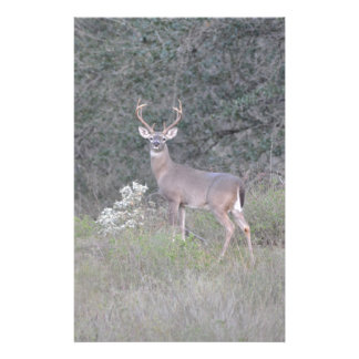 Deer walking on the ranch stationery