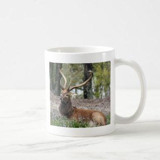 Deer - wild animal - gorgeous coffee mug